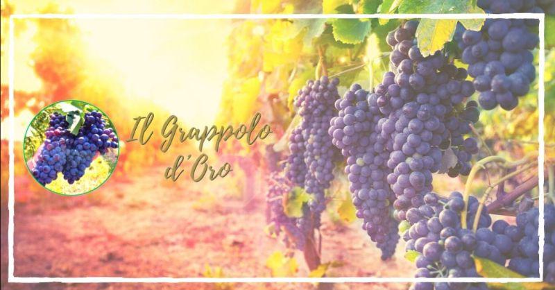 Offerta lavorazioni agricole conto terzi Verona - occasione servizi per cantine vinicole Vicenza